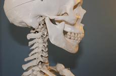ヒトの脳の進化を決定づけた「三項関係の理解」
