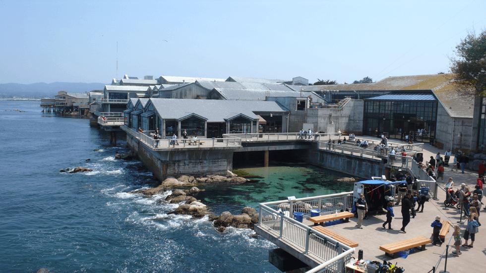 モントレーベイ水族館は必見!文化は寄付によって育つ