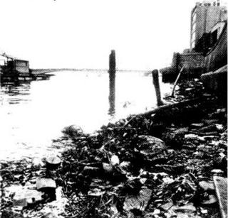 50年前には想像できなかった「環境の美しい国」日本